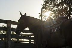 Silhouette de cheval de cowboy Images stock