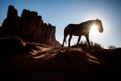 Silhouette de cheval marchant devant le MESA de désert Images libres de droits