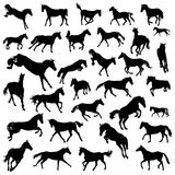 Silhouette de chevaux Photo stock