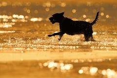 Silhouette de chien éclaboussant l'eau Images stock