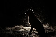 Silhouette de chien dans les phares image stock