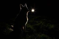 Silhouette de chien dans les phares photo libre de droits