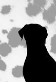 Silhouette de chienchiens. photo libre de droits