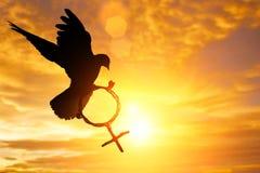 Silhouette de colombe tenant la branche dans le vol de forme de symbole de Vénus sur le ciel bleu Images stock