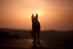 Silhouette de contre-jour de chien dans le coucher du soleil Image stock