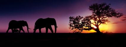 Silhouette de coucher du soleil d'?l?phants africains _voyage, faune et environnement concept photo libre de droits