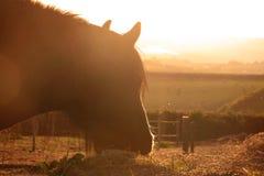 Silhouette de coucher du soleil d'une tête de cheval photo libre de droits