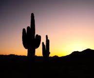 Silhouette de coucher du soleil de cactus Image libre de droits
