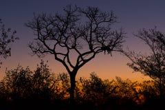 Silhouette de coucher du soleil de léopard Image stock