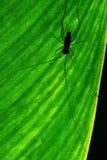 Silhouette de cricket Images stock