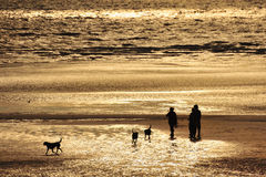 Silhouette de Dogwalkers Photos libres de droits