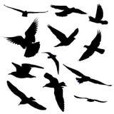 Silhouette de douze oiseaux Photo stock