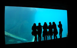 Silhouette de filles d'aquarium Images stock