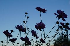 Silhouette de fleur Image stock