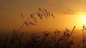 Silhouette de fleur sauvage Photo stock