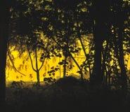 Silhouette de forêt Image stock