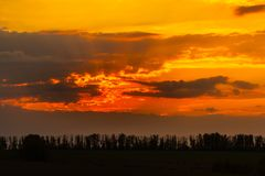 Silhouette de forêt au coucher du soleil image libre de droits