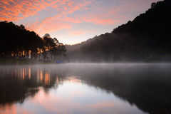 Silhouette de forêt de réflexion Photographie stock