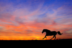 Silhouette de galop de fonctionnement de cheval sur le fond de coucher du soleil Image libre de droits
