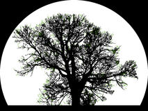 Silhouette de grand arbre Photographie stock libre de droits