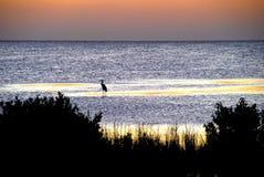 Silhouette de héron Images stock