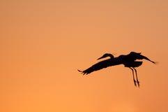 Silhouette de héron contre le ciel orange Image libre de droits