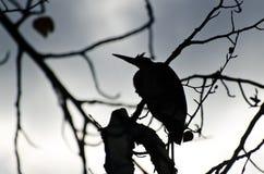 Silhouette de héron de grand bleu Photo libre de droits