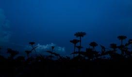 Silhouette de jardin de Zinnia en ciel bleu Images libres de droits