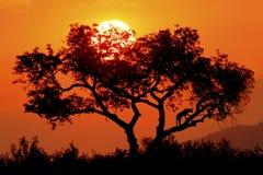 Silhouette de léopard images stock