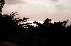 Silhouette de l'arbre contre le coucher du soleil de mer Photos stock