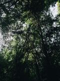Silhouette de l'arbre dans la forêt Image libre de droits