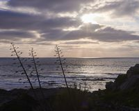 Silhouette de l'arbre en falaise devant la mer image stock