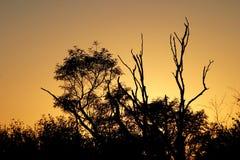 Silhouette de lever de soleil Photos stock