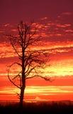 Silhouette de lever de soleil Image stock