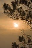 Silhouette de lever de soleil d'arbre de pin Image stock
