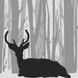 Silhouette de mâle de cerfs communs dans le paysage de forêt Photos libres de droits