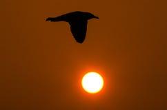 Silhouette de mouette Photo libre de droits