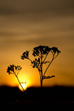 Silhouette de nature Image stock