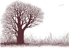 Silhouette de nature Photo libre de droits