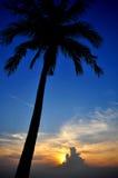 Silhouette de noix de coco Photos stock