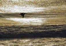 Silhouette de pélican au coucher du soleil sur les banques externes Images libres de droits