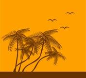 Silhouette de palmier Images stock