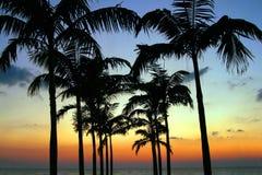 Silhouette de palmier Photographie stock libre de droits