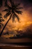 Silhouette de palmier au beau coucher du soleil tropical Photos stock