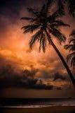 Silhouette de palmier au beau coucher du soleil tropical Image stock