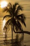 Silhouette de palmier au coucher du soleil sur la plage tropicale, île Koh Phangan, Thaïlande Image stock