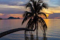 Silhouette de palmier au coucher du soleil sur la plage tropicale, île Koh Phangan, Thaïlande Photographie stock libre de droits
