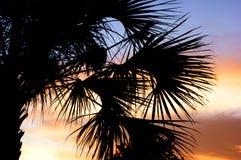 Silhouette de palmier avec le coucher du soleil Photo stock
