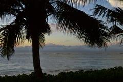 Silhouette de palmier contre l'océan et le ciel Image libre de droits