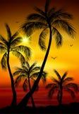 Silhouette de palmier Feuilles de palmier sur le fond d'été Image stock